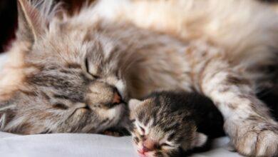 17-febbraio-ricorre-giornata-internazionale-gatto