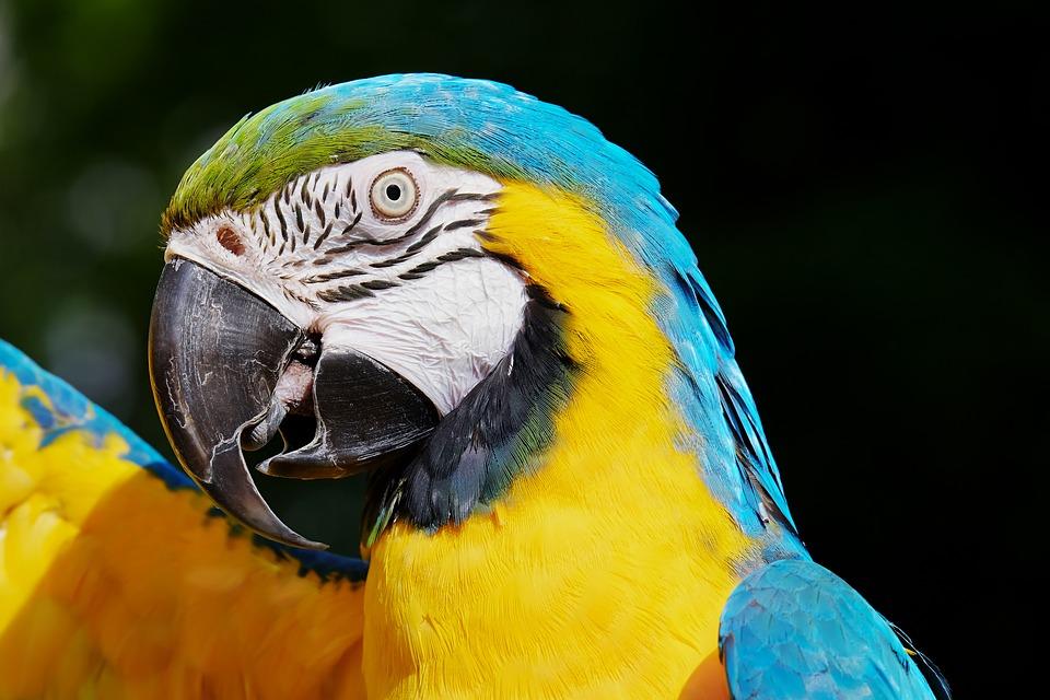 pappagallo-arrestato-brasile-spacciatore