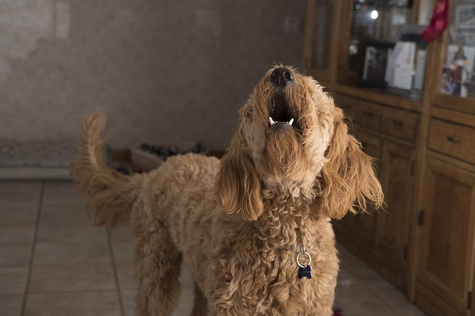 Photo of Aggredisce il vicino di casa e la figlia disabile perchè disturbato dall'abbaiare del cane. Succede ad Imperia