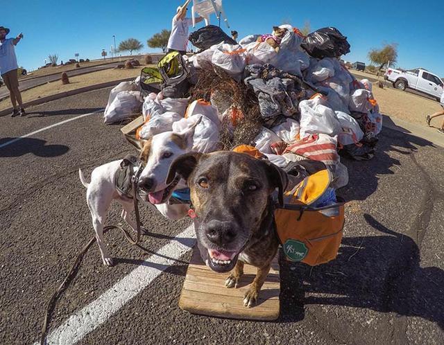 Photo of Chipper, il cane ecologista: raccoglie i rifiuti e fa la differenziata