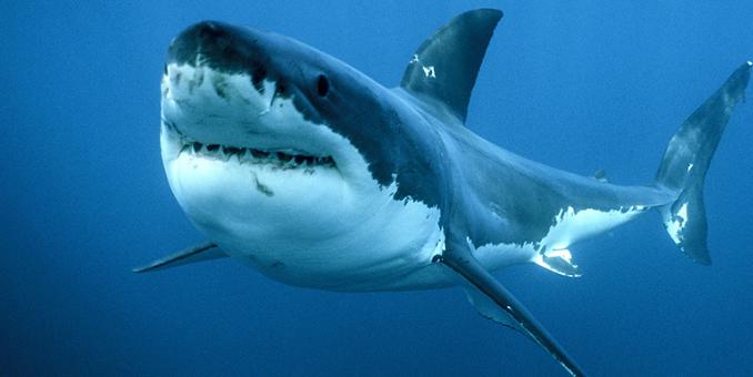 Photo of Nuova Caledonia, squalo attacca bimbo di 10 anni e fa a pezzi la gamba e parte dell'addome