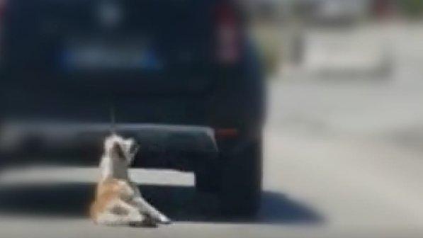 Photo of Cane trascinato da un'auto in corsa, l'immagine shock