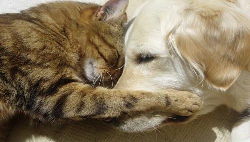 animali-domestici-affidamento-divorzio