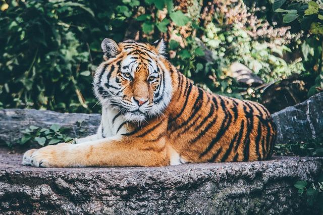 india-tigre-villaggio-sbrana-uccidere-tre-persone