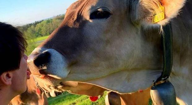 mucca-pazza-svizzera