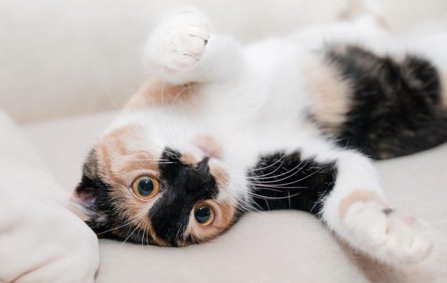 8-agosto-giornata-internazionale-del-gatto