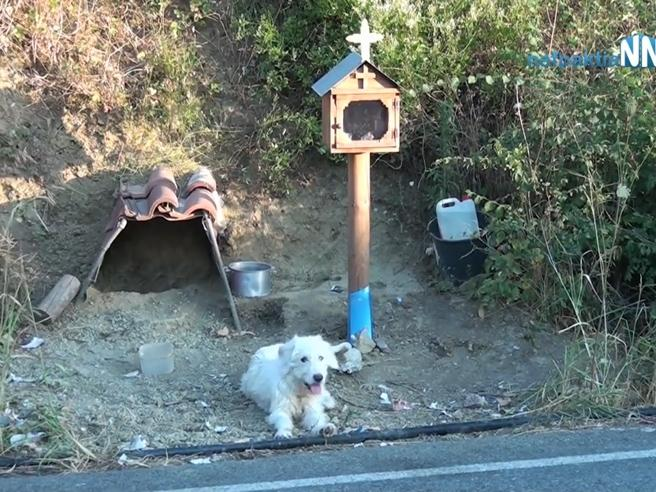 Photo of Grecia, il cane che da un anno e mezzo aspetta il padrone defunto