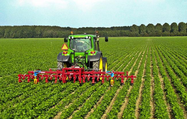regione-campania-fondi-aziende-agricole