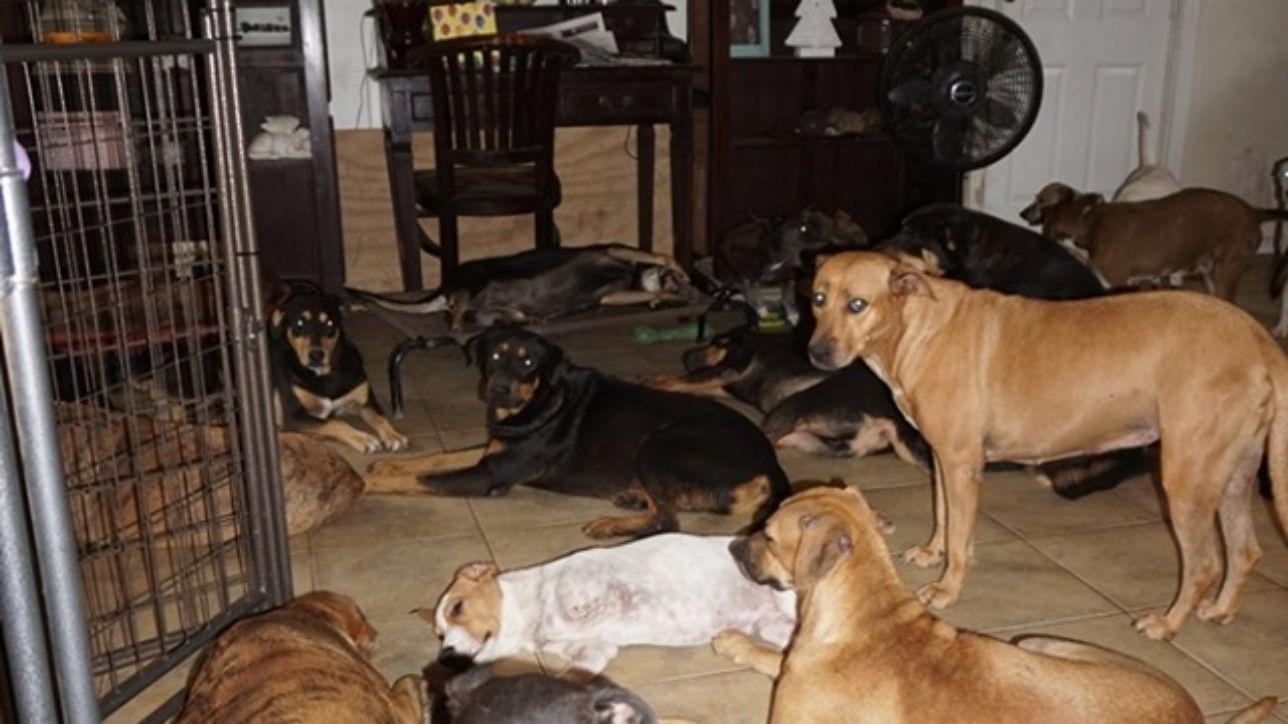 cani-uragano-dorian-Bahamas