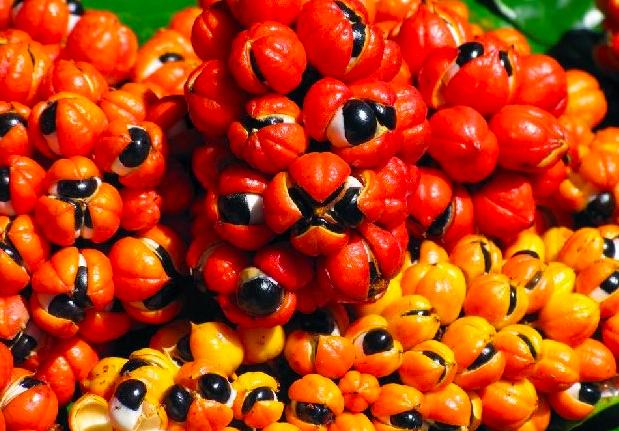 benefici-dimagranti-guarana