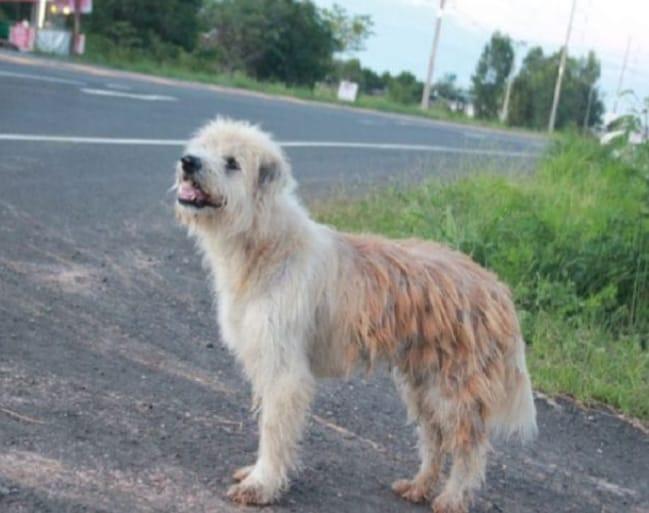Photo of La storia di BonBon, il cane che ha aspettato 4 anni i suoi padroni fermo in un incrocio