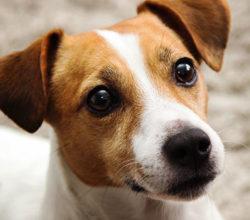 maltrattamenti-cani-rubarli-salvarli-reato