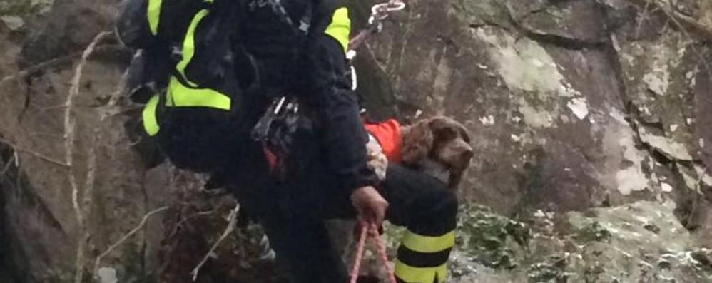 Photo of Cane precipita in un crepaccio: salvato in elicottero dai vigili del fuoco