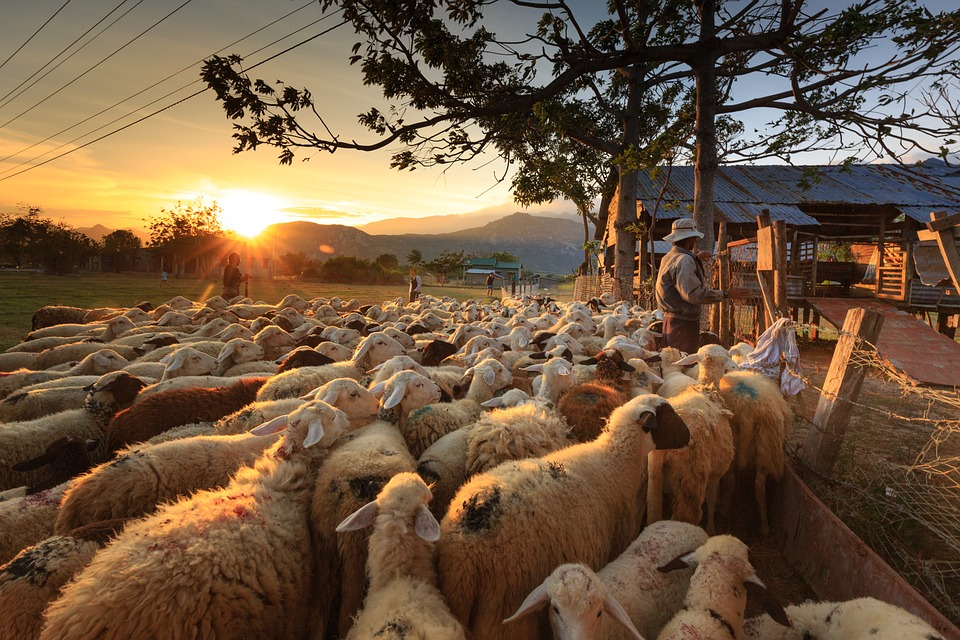 pastore-reddito-di-cittadinanza