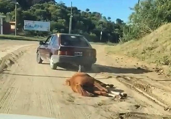 cavallo-legato-auto