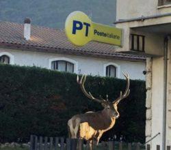 villetta-barrea-cervo-ufficio-postale