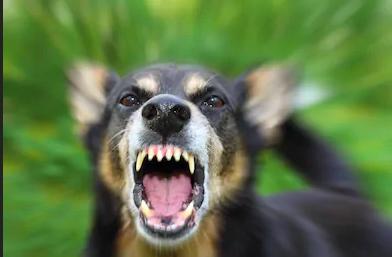 uomo-sbranato-cani