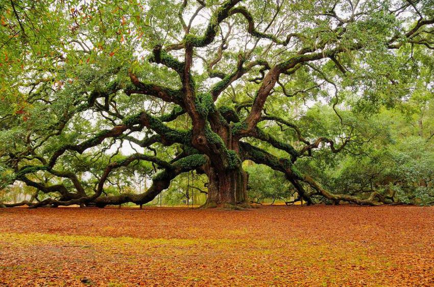 Photo of Il 22 maggio è la Giornata mondiale della biodiversità