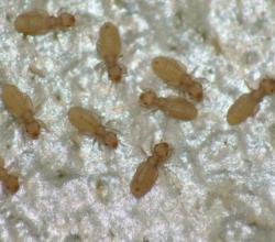 europa-pasta-allerta-insetti