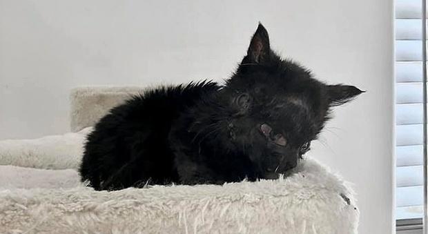 Photo of Gatto nasce con due facce: il cucciolo mangia da entrambe le bocche