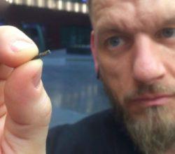 microchip-svezia-cosa-serve-quanto-costa
