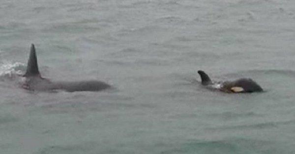 orche-italia-genova