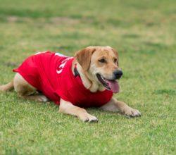 invade-campo-partita-calcio-cane-adottato-squadra