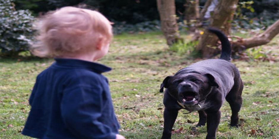 milano-bambino-azzannato-cane