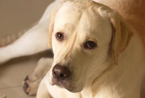 Il Cane Non Smette Di Abbaiare E Lei Lo Uccide Affongandolo Nella