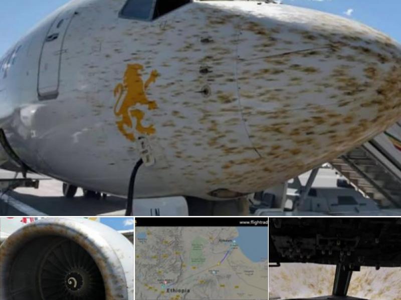 Photo of Etiopia, milioni di locuste impediscono l'atterraggio di un aereo