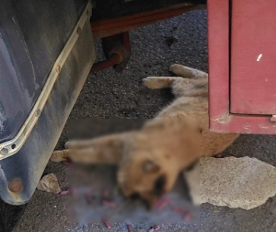gatto-ucciso-petardi-messina