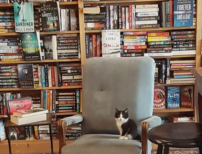 Photo of Canada, gattini in cerca di adozione in libreria