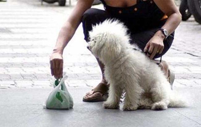 esaminare-deiezioni-canine-bolzano
