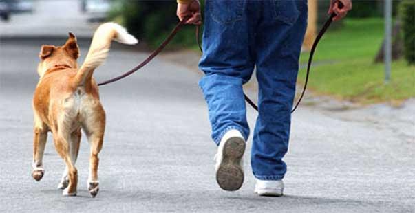 uscire-passeggiata-coronavirus-cane