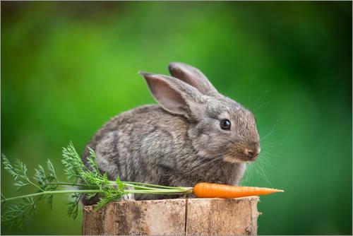 carote-coniglio