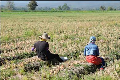 decreto-rilancio-indennita-braccianti-agricoli