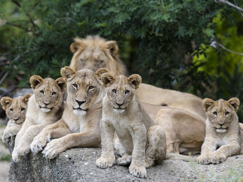 Photo of Fase 2, in Campania riaprono anche gli zoo: l'ordinanza