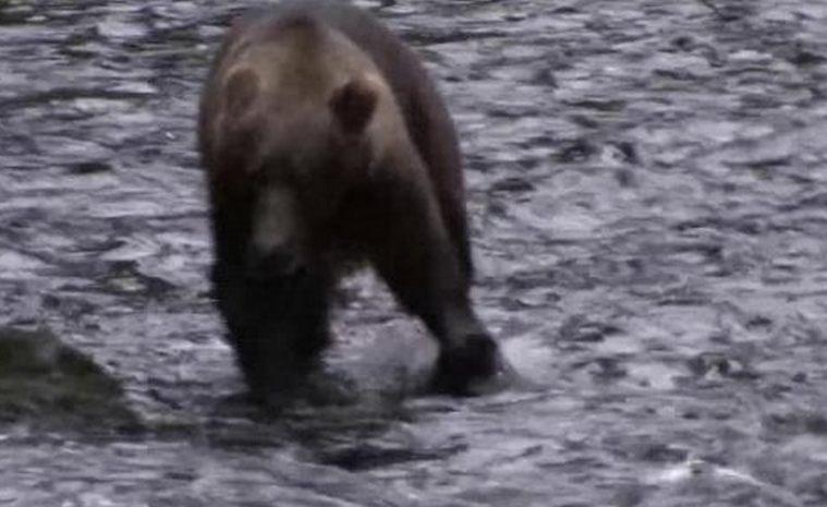 orso-aggredito-padre-figlio-abbattuto