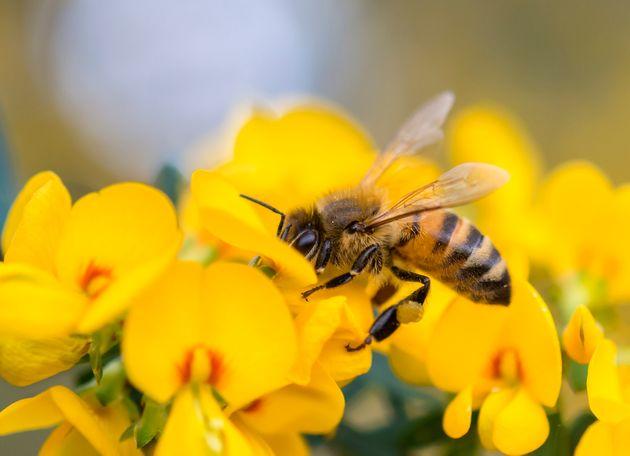 punto-ape-muore-shock-anafilattico