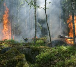 allarme-incendi-grave-pericolosità-campania
