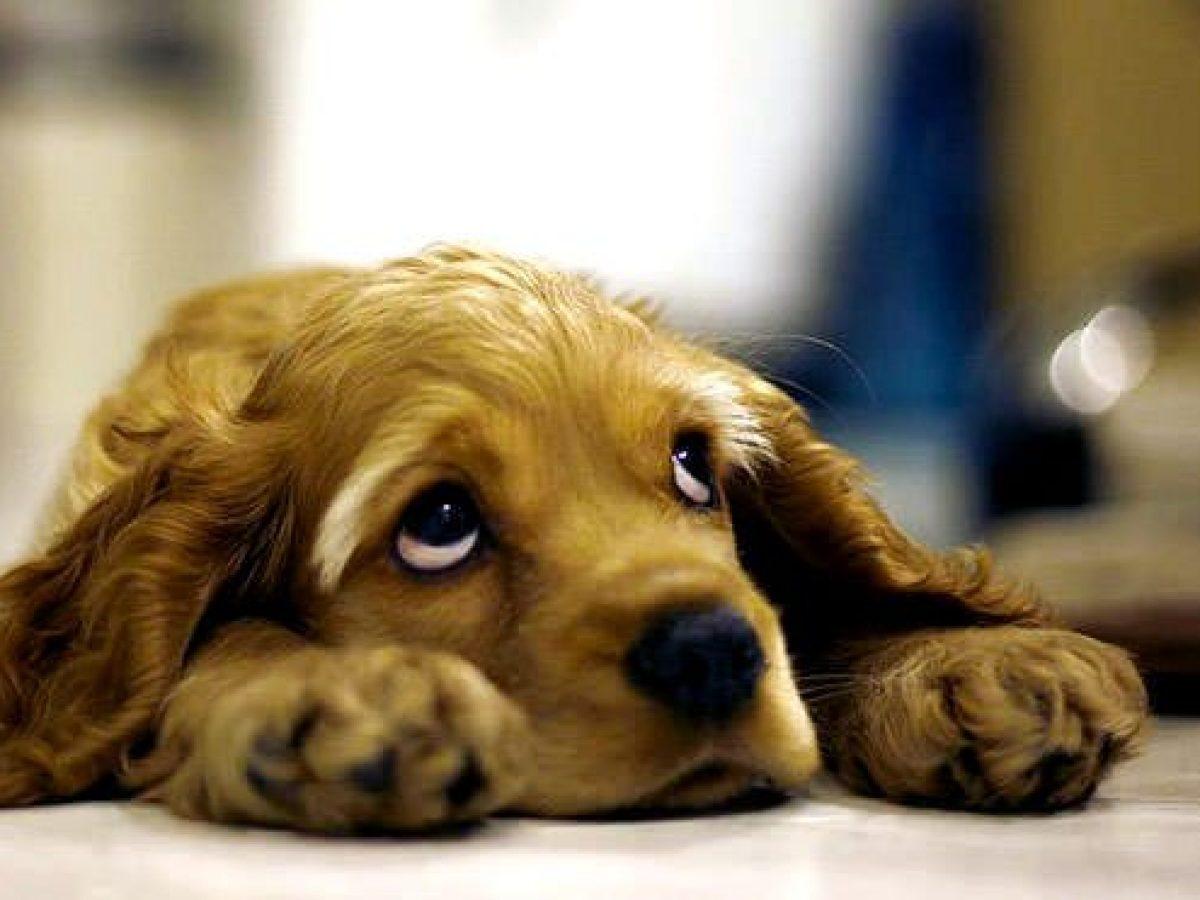 Photo of Congedo parentale se arriva il cane in famiglia: la Barkyn è la prima azienda Italiana