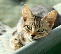 uccide-gatto-graffiato-schiacciato-portone