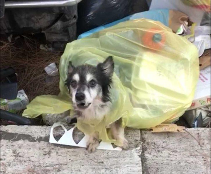roma-cagnolino-abbandonato-sacco-immondizia