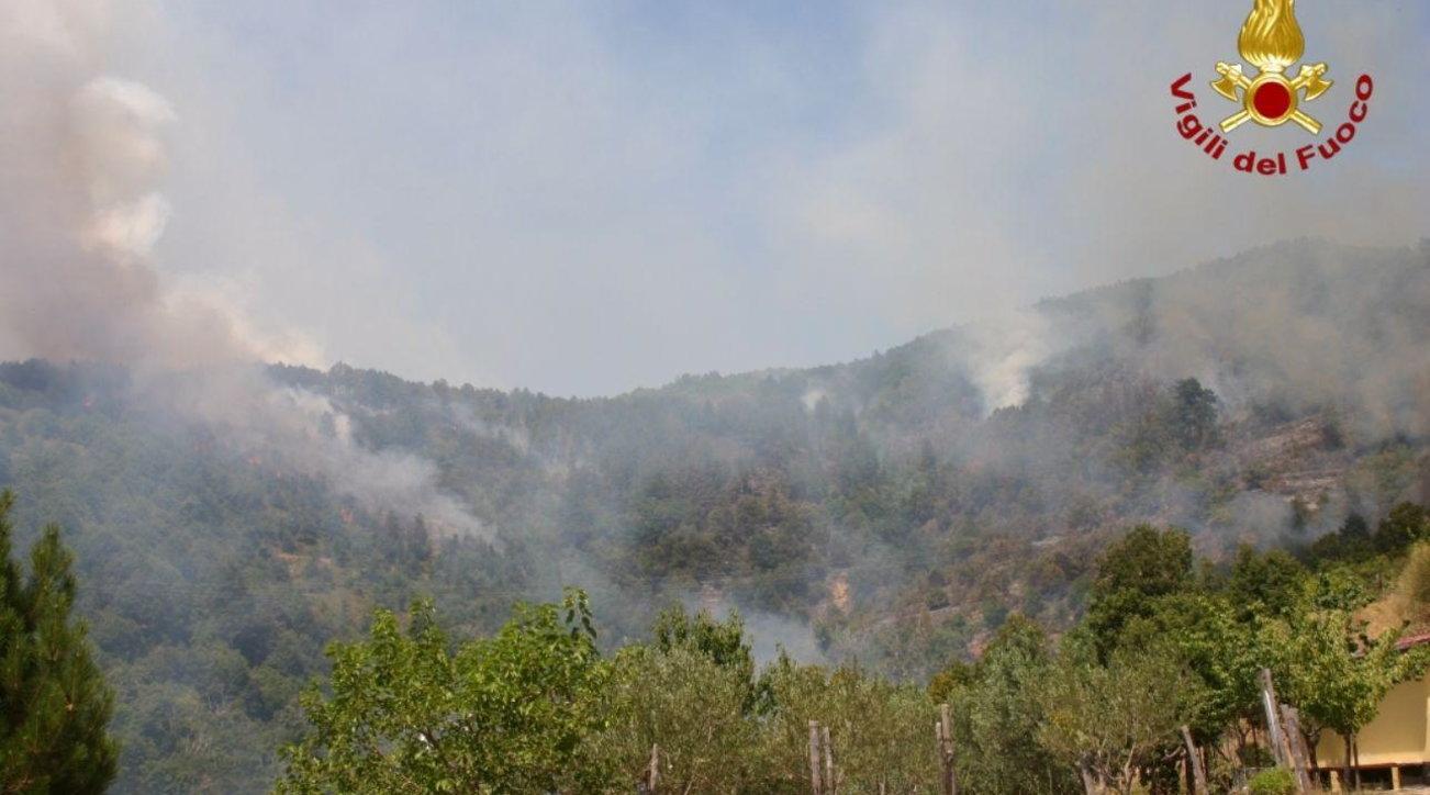 incendio-livornese-distrutti-cinque-ettari-bosco