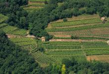 Photo of Decreto Ristori: esonero contributivo per la filiera agricola, della pesca e dell'acquacoltura