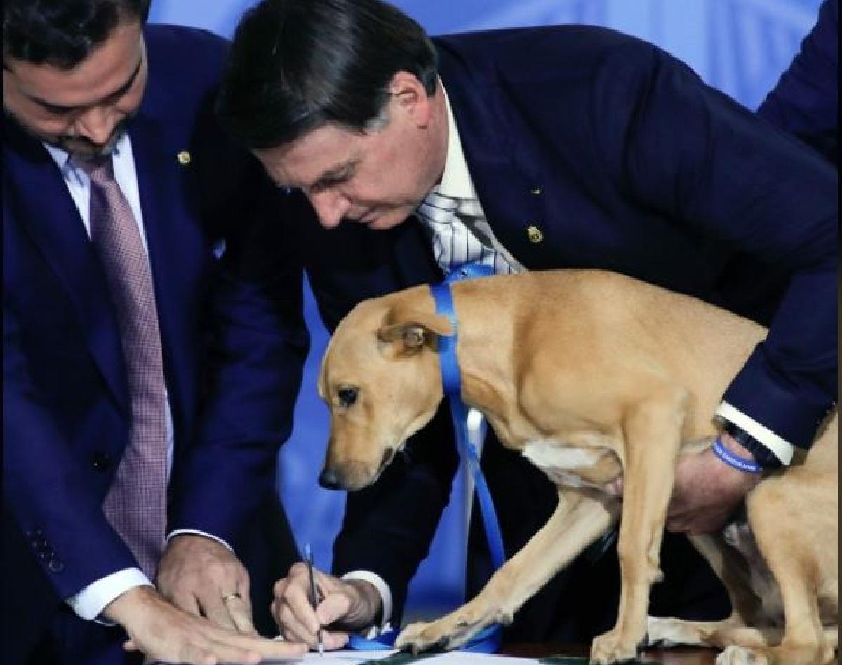 Photo of Bolsonaro fa firmare al suo cane la legge sugli abusi contro gli animali / IL VIDEO