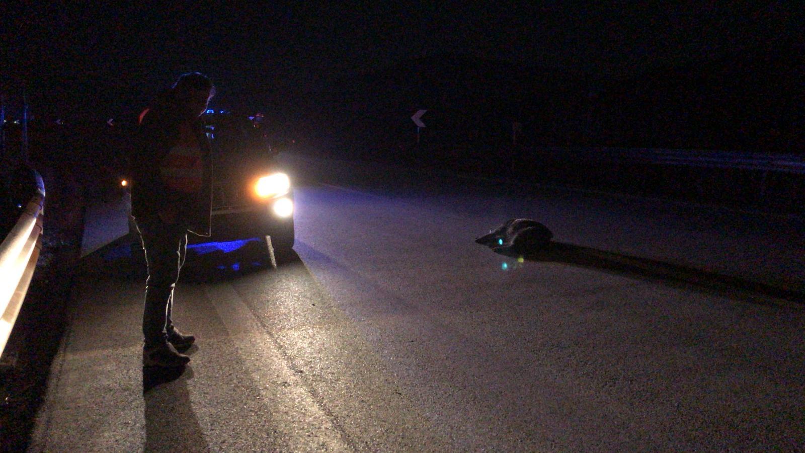 Photo of Tragedia sull'A26: auto investe cinghiali e finisce fuori strada, morte due persone