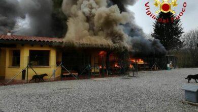 incendio-canile-olgiate-comasco-13-febbraio