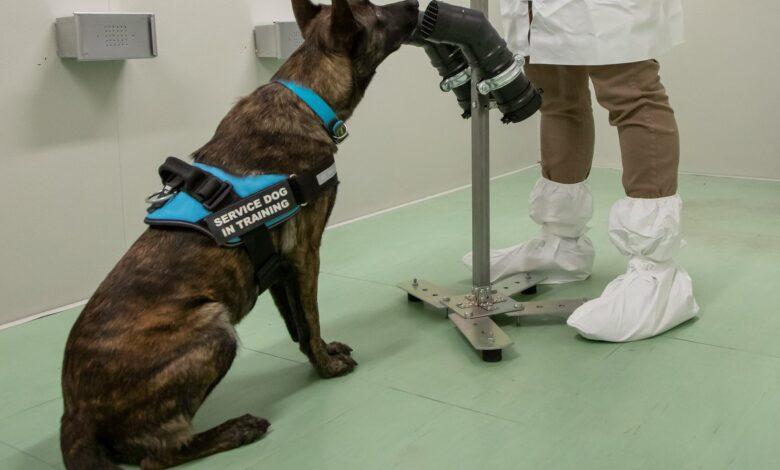 covid-cani-addestrati-riconoscere-odore-virus