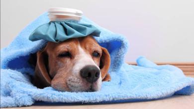 cura-animali-farmaci-uso-umano-decreto